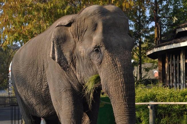 Oldest North American Elephant Dies in Vallejo