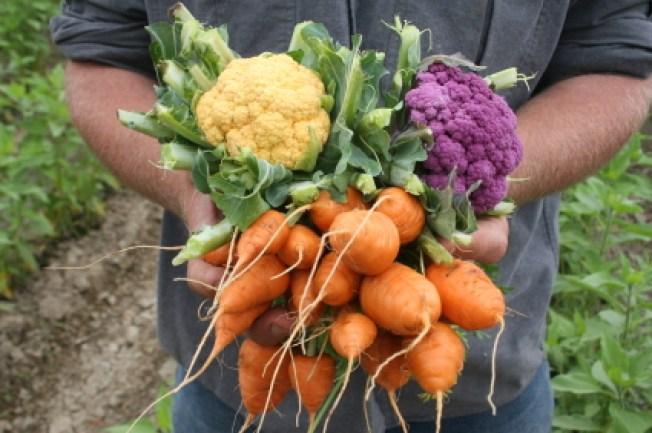Food Literacy Resolution Peeves Some Grocers, Growers
