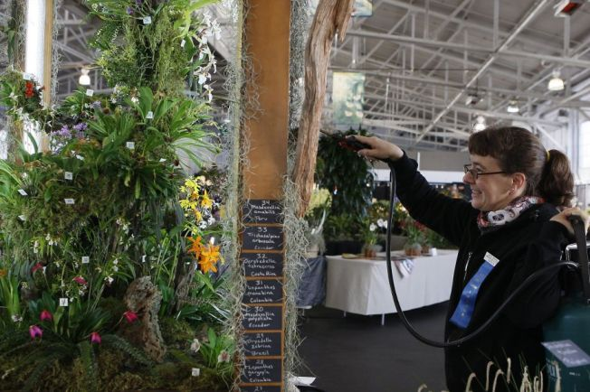 64th Annual Orchid Exposition