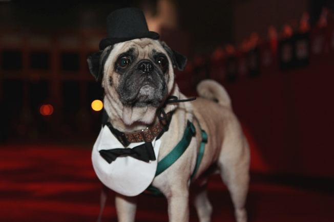 18th Annual Bark & Whine Ball
