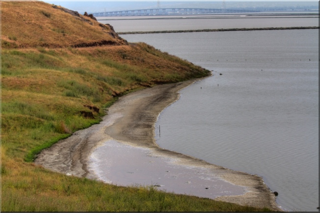 Dumbarton Bridge Set to Host Thousands of Birds