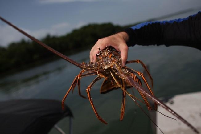 Lobstermen Feeling The Pinch