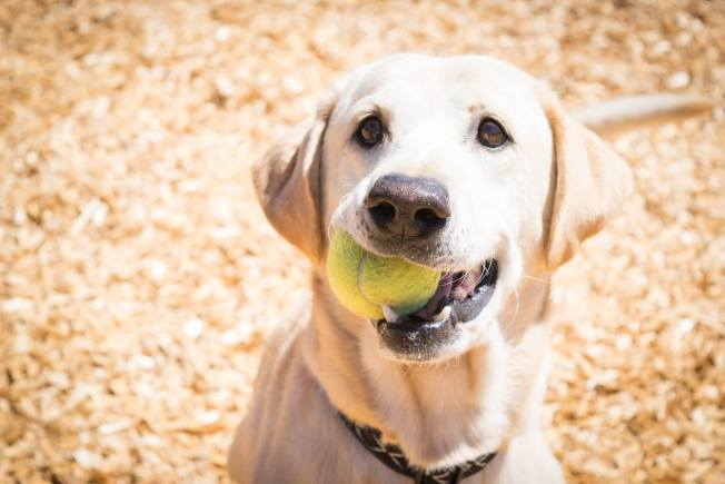 Find a Pet to Call Your Own At Napa County Animal Shelter & Adoption Center