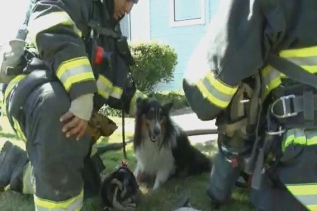 Dog Rescued From Burning Building in Vallejo