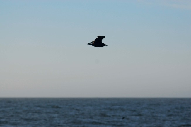 Bay Area Boaters Warned: Don't Bother the Birds