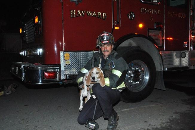 Hayward Firefighters Rescue Basset Hound