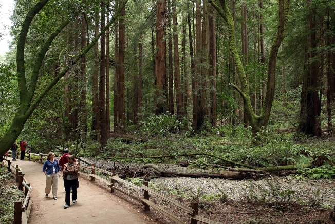 Visiting Muir Woods Will Require Reservation in 2018