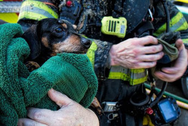 Dog Saved From Burning San Jose House - NBC Bay Area