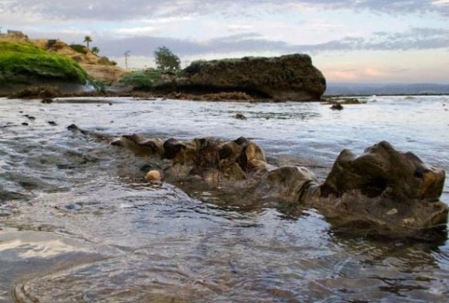 Surfers in California Make Prehistoric Find