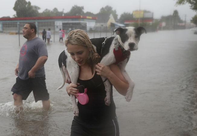 Livermore Group Helping Rescue Shelter Animals Out of Harvey-Affected Areas