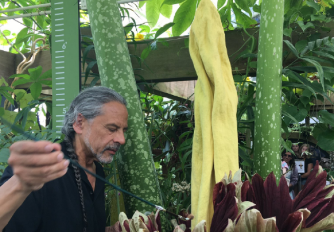 Conservatory of Flowers Reveals Their Smelliest Attraction to Date: The Corpse Flower