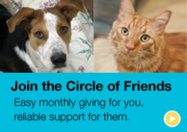 Volunteer at the SF SPCA Sept 22!