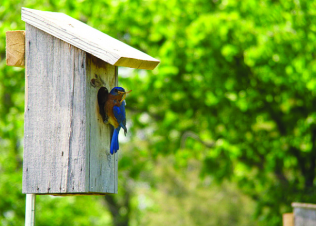 Successful Backyard Birdhouses with Guadalupe River Park Conservancy