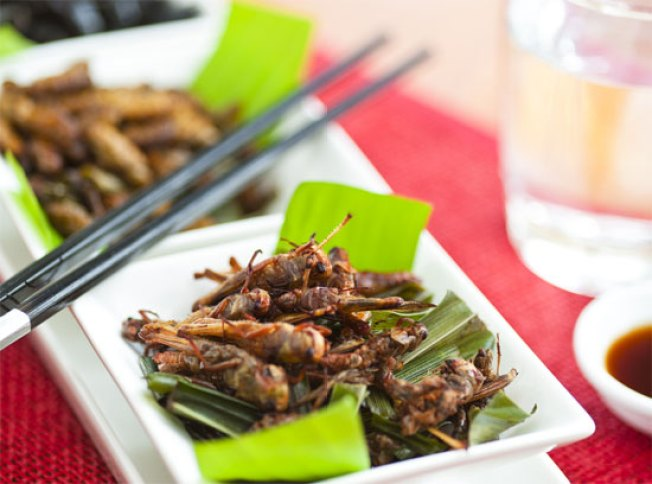 Eating Bugs Can Help Save the Planet