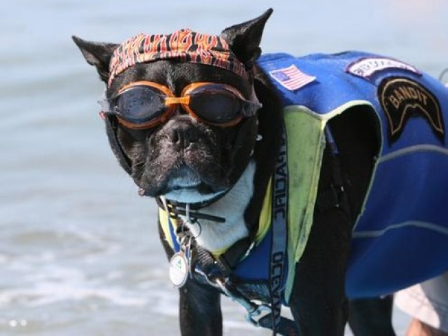 Worth the Drive: Surf Dog Surf-A-Thon