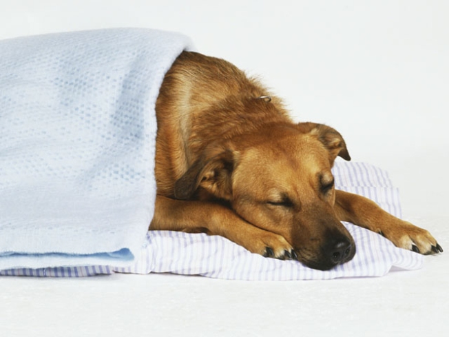 When Treating Your Pet Makes Them Sick