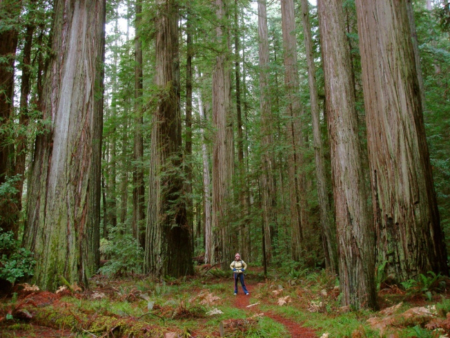 Mutant Albino Redwoods Intrigue Researchers