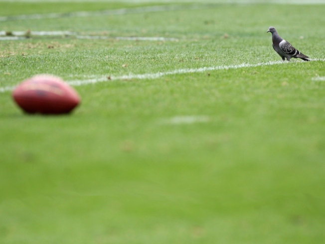 Pigeon Joins Raiders to Soar Past Eagles