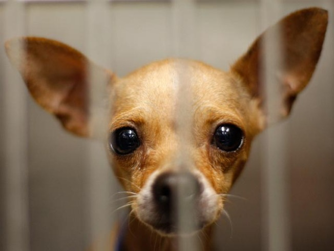 San Francisco Considers Ban on Small Pet Sales
