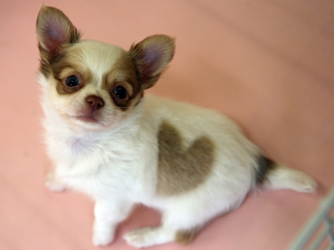 South Florida Animal Carnage Continues: Chihuahua Decapitated