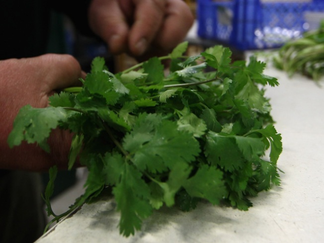 Contaminated Cilantro Recall in Bay Area
