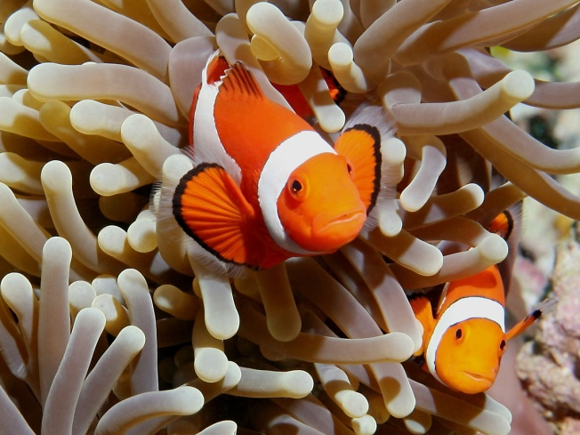 Online Dating Scam Artist Targets SJ Divorcee
