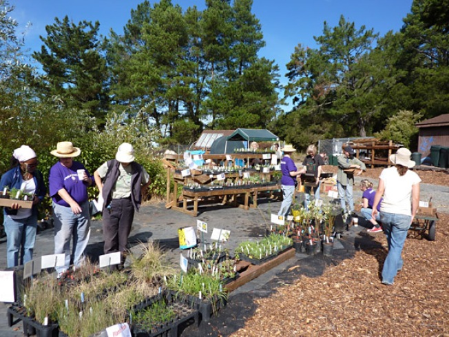 Transplant Yourself to the Native Plant Nursery Oct 3