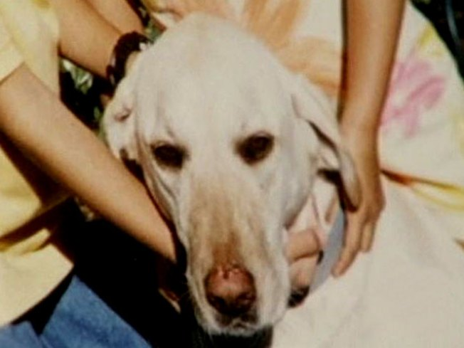 Oakland Police Shoot, Kill Family's Yellow Lab
