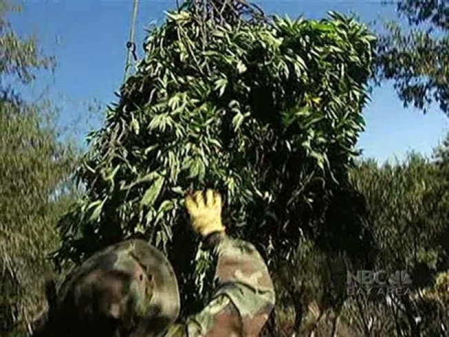 Growers Tune In For Pot Raids Tips