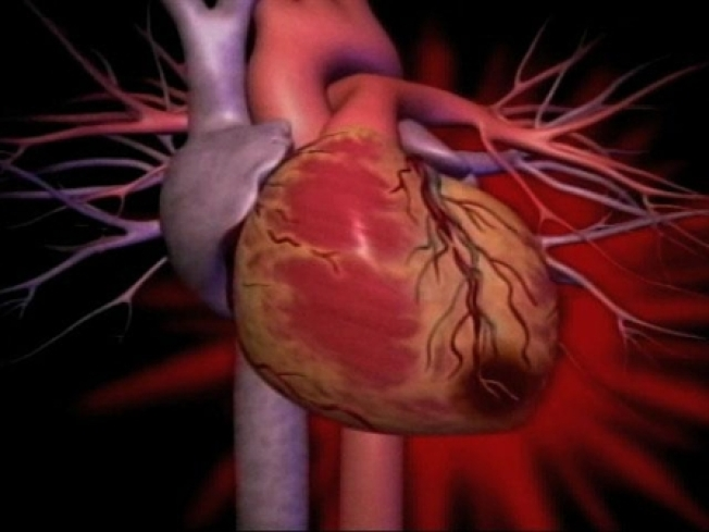"Cal Closer to Building ""Organs from Scratch"""