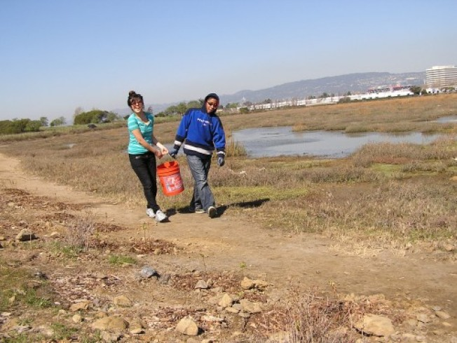 Volunteer at the Faber Tract near the Palo Alto Baylands Nov 17