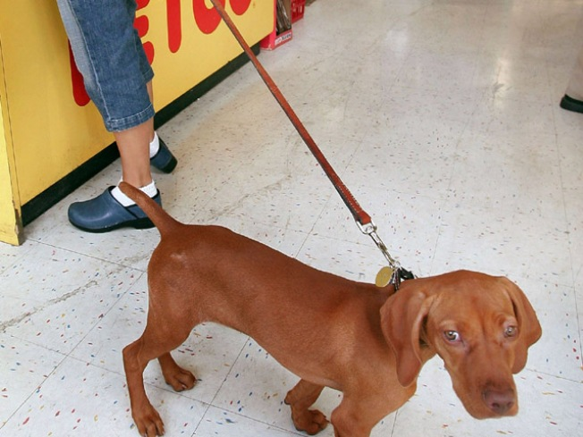 Petco Agrees to Pay $1.75M