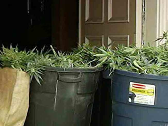 Skunky Pot Leads to Big Bust in SF