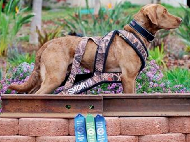 Jumping Dogs Are Pittsburg Company's Business