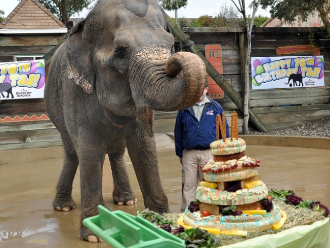 America's Oldest Elephant Turns 70