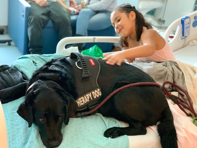 CMPC Hospital's 'Chief Medical Paw-fficer' Helps Patients Recover