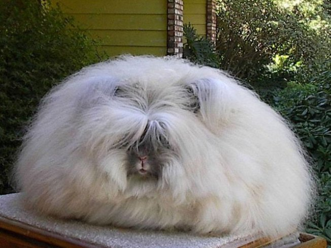Gap Does About-Face on Angora After PETA Slap