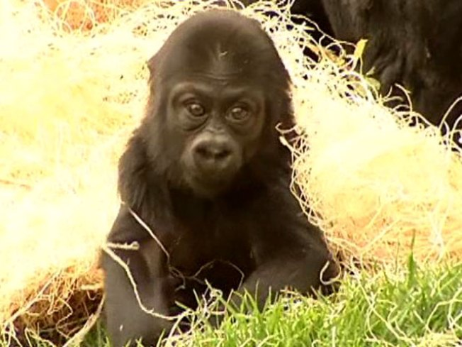 Special Birthday Marked at SF Zoo