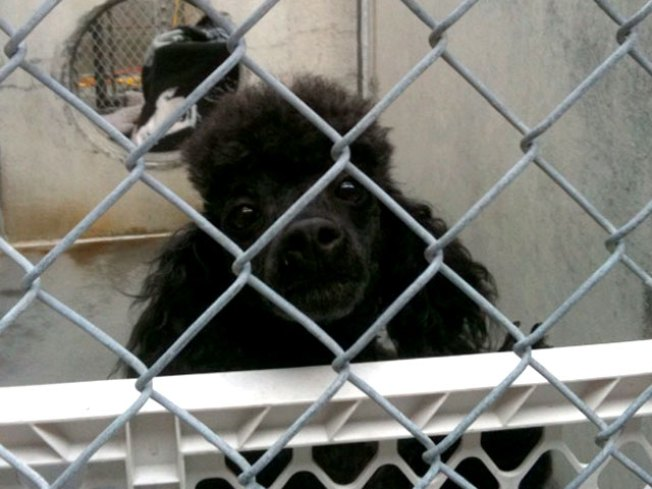 Animal Shelter Fire Kills 12 Cats; 26 Animals Rescued