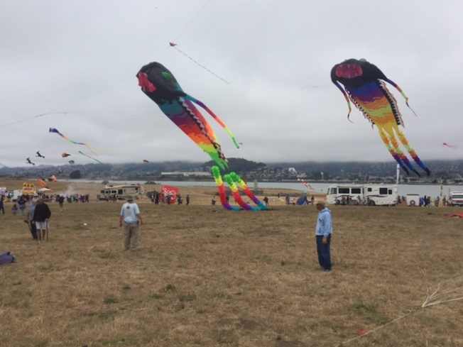 Dancing Kites Brighten East Bay Sky