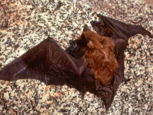 Going Batty in American Canyon
