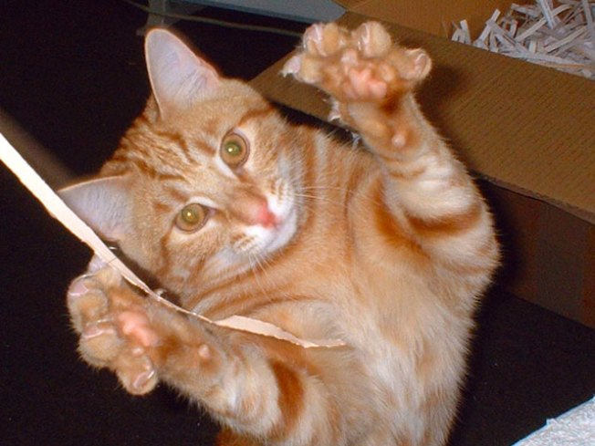 SF Scratches Out Cat Declawing