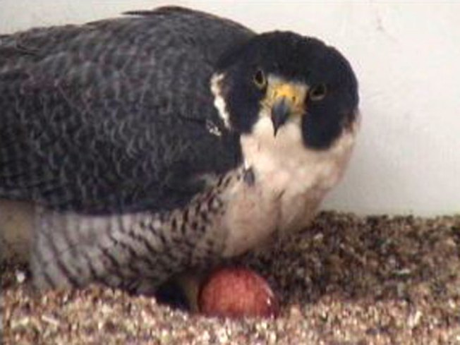 TGI-Falcon, Naming Contest Extended