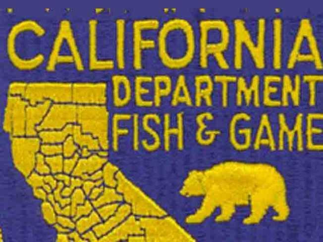 Bear Carcass Dumped at East Bay Market