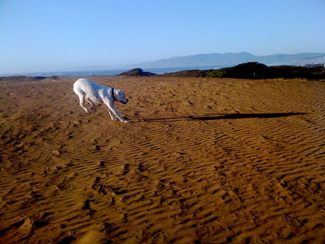 The Bay's Best Dog Parks