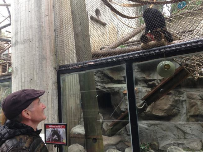 San Francisco Zoo Names Howler Monkey for Robin Williams