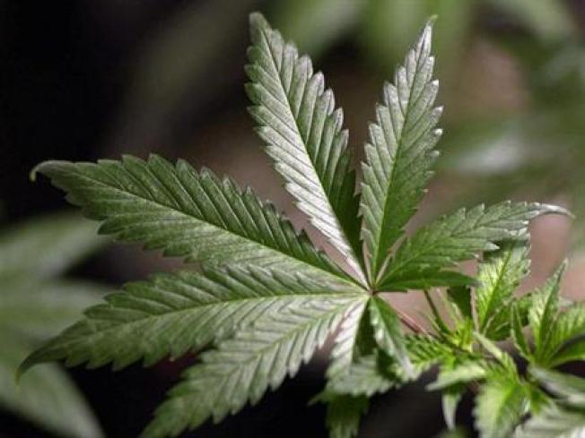 Palo Alto Hills Pot Bust Nets $60 Million in Plants