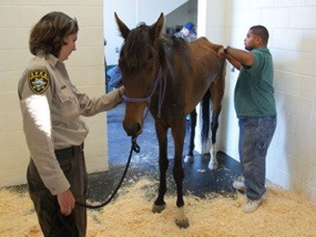 SPCA Looking for 18 Missing Horses