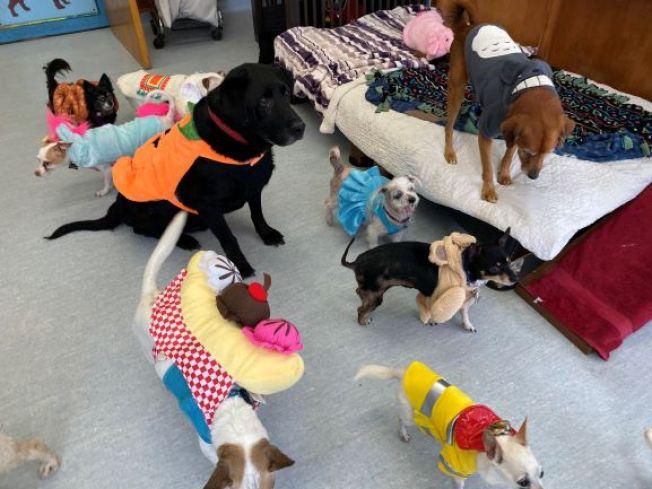 Muttville's Halloween Adopt-a-thon