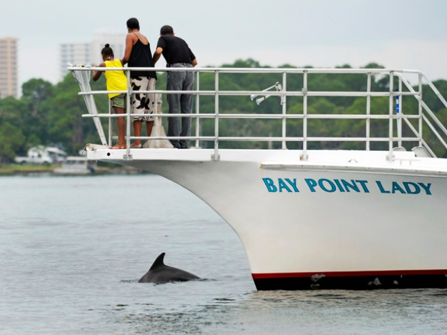 Decades Later, Missing Porpoises Return to Marin